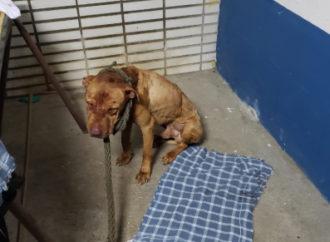Polícia resgata animais e prende 40 em 'rinha' que servia 'churrasco' de cachorro em SP