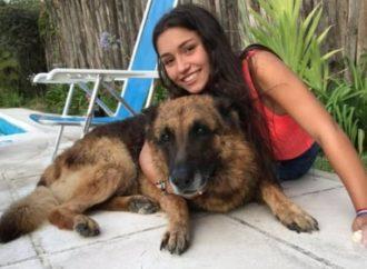 MUNDO: Jovem leva mordida de cão no rosto ao tentar tirar uma foto