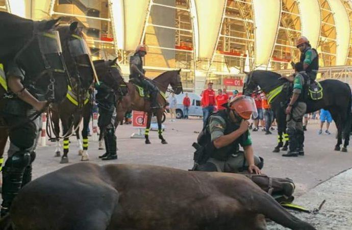 Policial chora ao ver seu cavalo morrer ao ter mal súbito no Beira Rio