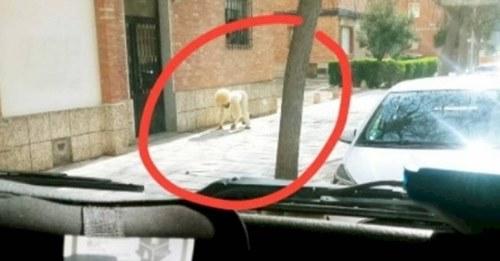 Homem se fantasia de cachorro para driblar a quarentena e sair de casa
