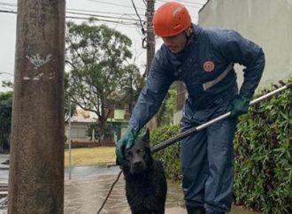 Duplo final feliz cão é resgatado de córrego e adotado em seguida