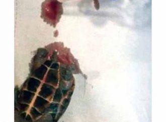 MUNDO: Mulher sai para beber com amigos e volta com tartaruga no seu orgão sexual