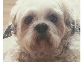 Cão entra na Justiça contra pet shop pedindo indenização por danos físicos e psicológicos
