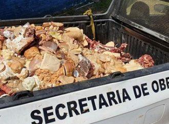 Após denúncia, dois mercados são interditados com 460kg de carne