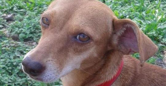 FAKE: Homem que matou cachorrinha não se mudou para Canoas