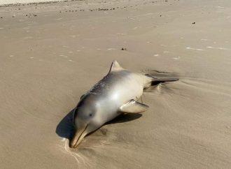 Mortes de Baleias e golfinhos preocupa especialistas