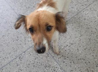 Idoso é Flagrado abusando de cachorrinha em Sapucaia do Sul