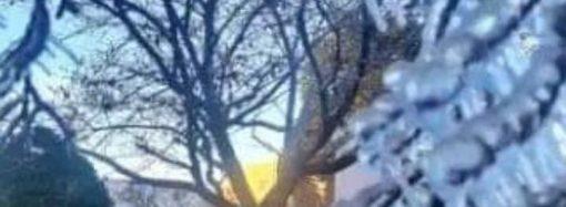 SANTA CATARINA: Com frio intenso árvores amanhecem congeladas