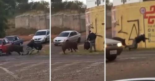 Motoboy tem o traseiro mordido por porco; veja o vídeo