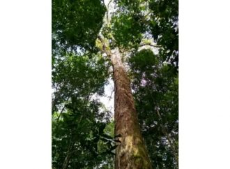 Menino morre em São Leopoldo após cair de uma árvore