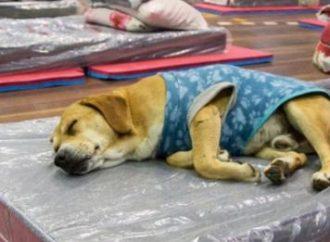 Lindo de se ver até o 'Zoreia' tá dormindo quentinho em Canoas