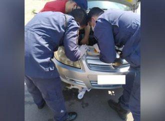 Gato preso em motor de carro é resgatado pelo Corpo de Bombeiros