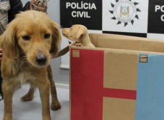 Mãe e filha são presas após abandonarem cadela e filhotes na região metropolitana